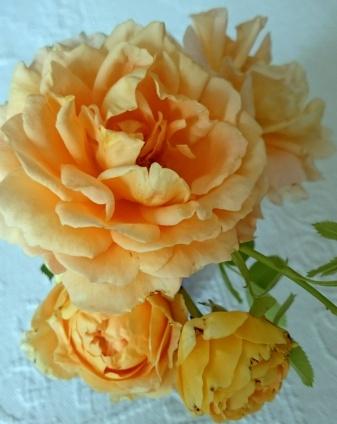 rose de michelle